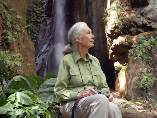 Dr. Jane Goodall beside a waterfall in Gombe National Park, Tanzania