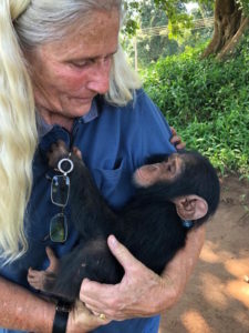 chimp John in my arms after undoing his cloth copy