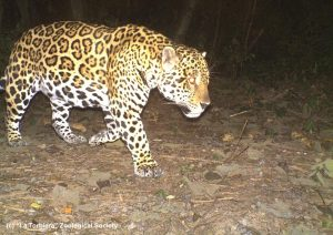 Operation Jaguar - Earth League International